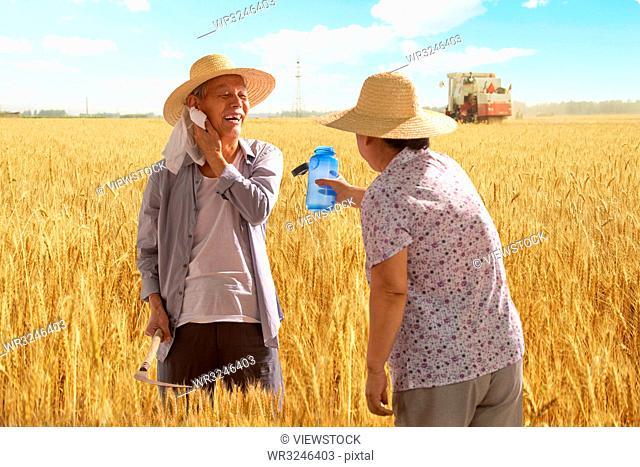 Elderly couple in the wheat field