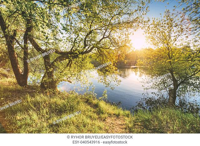 Gomel, Belarus. Sun Shining Through Branch And Foliage Of Tree Near River Or Lake At Spring Sunset Or Sunrise. Summer Landscape In Sunny Day. Nobody