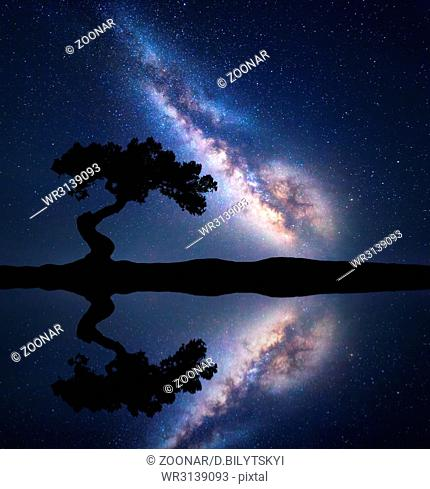 Milky Way with alone crooked tree on the hill