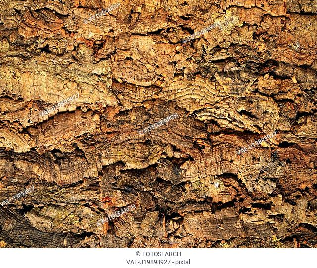 Photography of bark of cork tree, Close Up