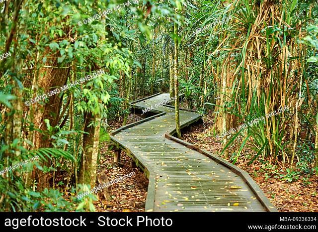 trail in the jungle, in the morning at Jumrum Creek Conservation Park, Kuranbda, Queensland, Australia