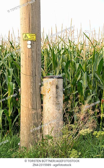 Wooden Electrical Power Pole in Front of Corn Field, Bad Schallerbach, Austria