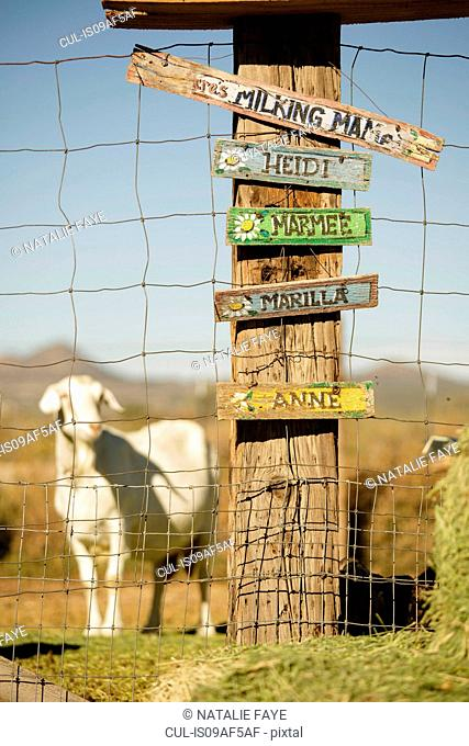Signs with goats names, goat in background