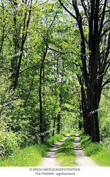 Spring on the River Iller bike path in Swabia