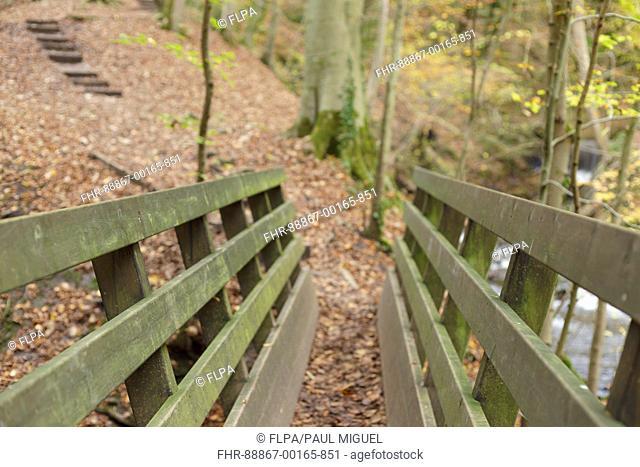 View of wooden footbridge at Eller Beck with fallen leaves, Skipton Woods, Skipton, North Yorkshire, England, November