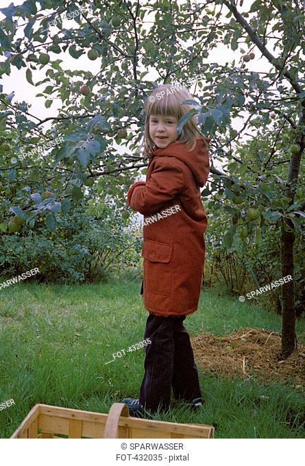 Girl picking apples in the garden