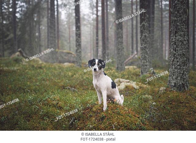 Portrait of dog sitting on grass against trees in forest