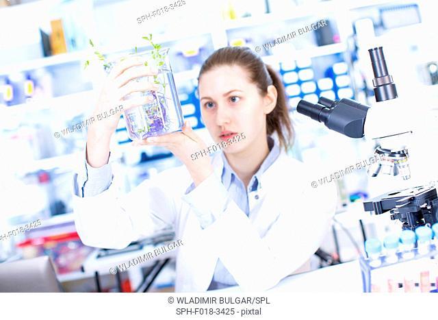 Female scientist holding plant in beaker in the laboratory