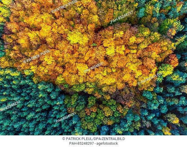 An aerial picture with a drone shows the fall foliage amongst pine trees near Sieversdorf, Germany, 30 October 2016. Photo: Patrick Pleul | usage worldwide