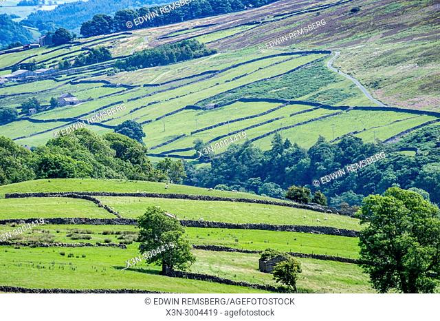 Stone walls spread across the rolling green hills of the Dales, Yorkshire Dales, UK