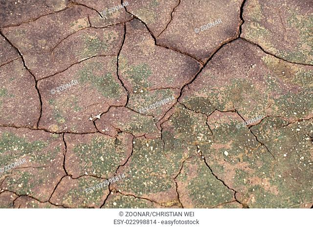 Mud surface with cracks