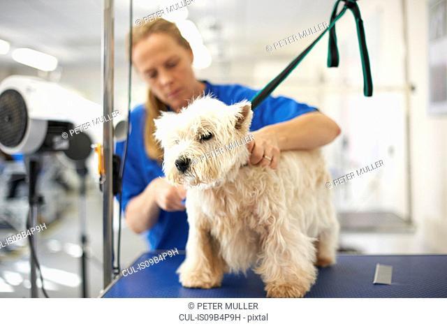 Woman grooming dog in pet salon