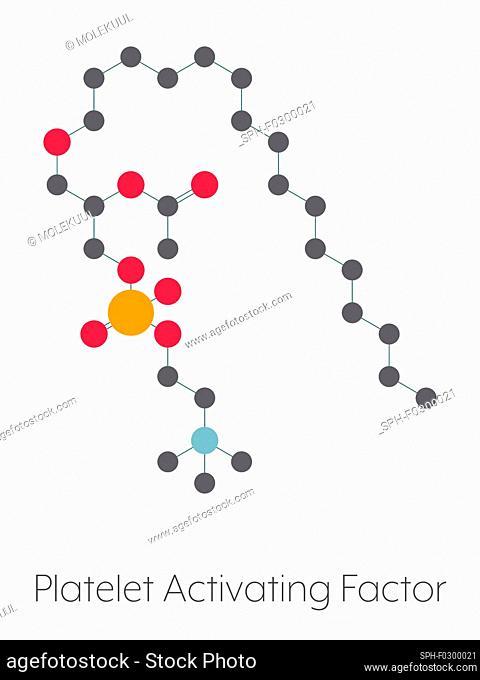 Platelet-activating factor molecule, illustration