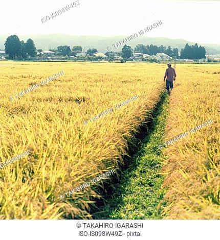 Man walking in rice paddy, Fukushima, Japan