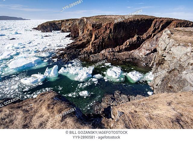 Sea ice and rocky headland in Elliston, near Bonavista, Newfoundland, Canada