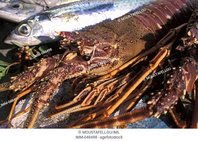 Cyclades: Sikinos Alopronia, port, fish, lobsters