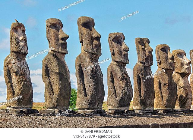 Moai statues at Ahu Tongariki on Easter Island, Chile. Ahu Tongariki is the largest ahu on Rapa Nui. Its moai were toppled during the island's civil wars and in...