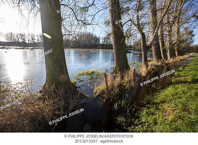 France, Brittany, Ille et Vilaine, Roz-Landrieux. The marsh of Dol de Bretagne flooded in winter