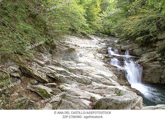 Autumn forest Selva de Irati fall beech jungle in Navarre Pyrenees of Spain Cascade landscape