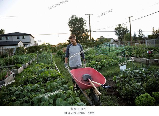 Man pushing wheelbarrow in vegetable garden