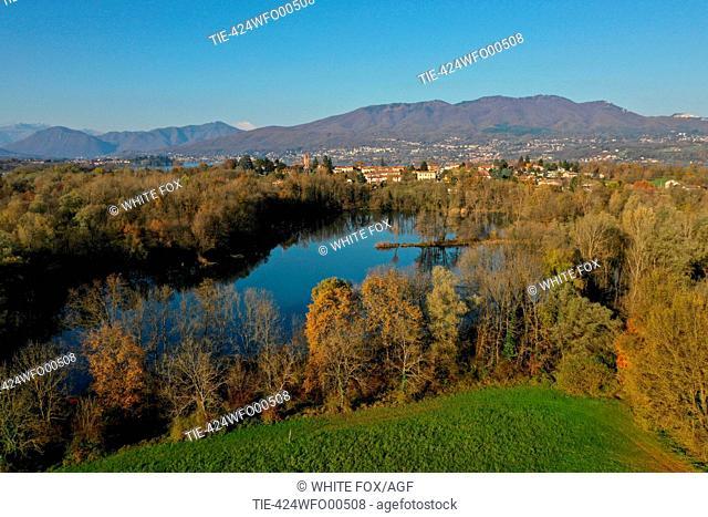 Italy, Lombardy, Cazzago Brabbia, swamp