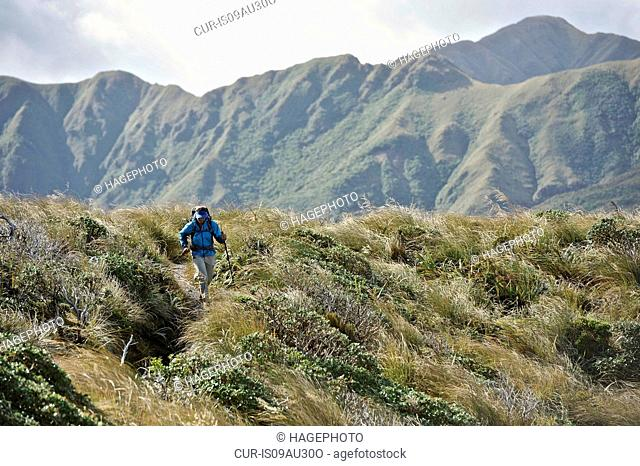 Female hiker hiking in mountains, Tararua Ridge, New Zealand