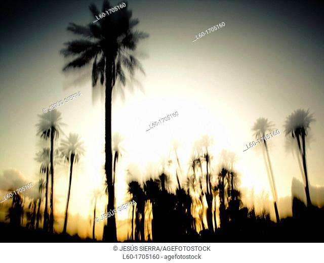 Sunrise in Figuig, Morocco