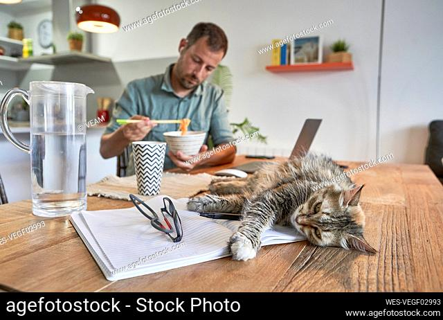 Cat lying on book while businessman eating noodles when working at home