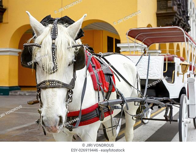Traditional Horse-Drawn Vehicle in Lima, Peru. A Beautiful White Horse Hitched to a Four Wheel Carriage