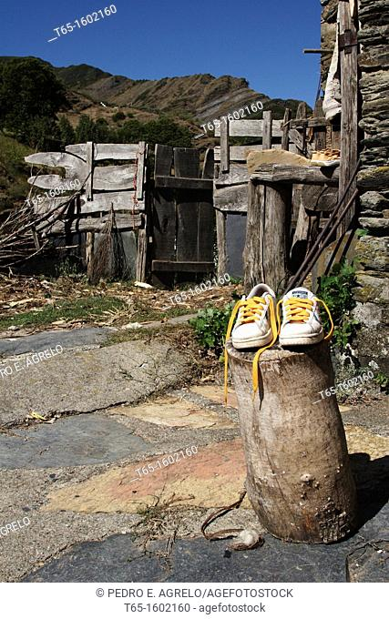 Sneakers on stump