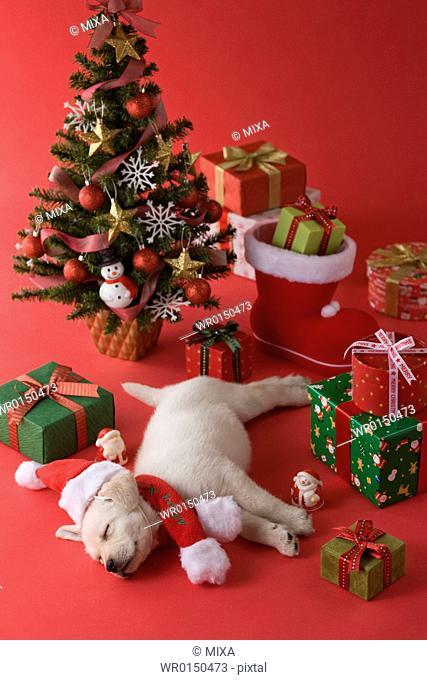 Golden Retriever Puppy and Christmas