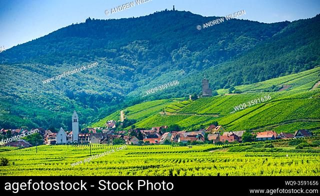 Vinyards around the village of Katzenthal in the foothills of the Vosges mountains in Alsace, France