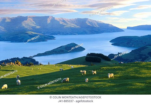 Late evening light over Akaroa Harbour from near hilltop, Banks Peninsula, New Zealand