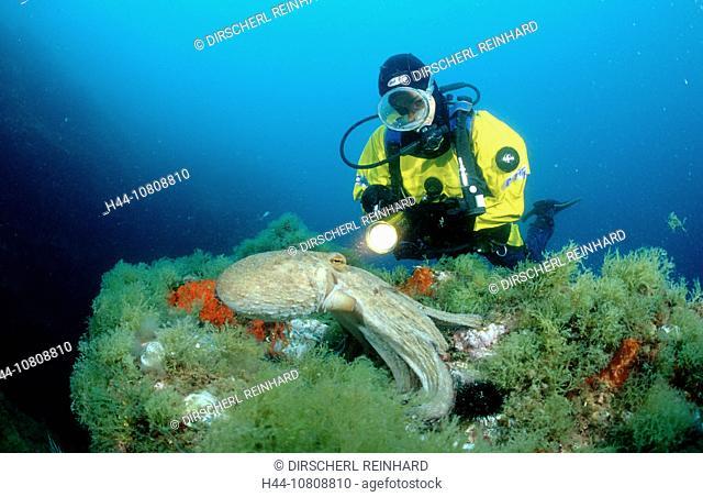 action, Costa Brava, diving, holiday, holidays, live, marine, Mediterranean Sea, model release, nature, ocean, Octop