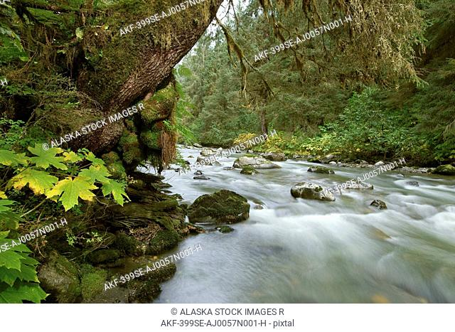 Small river flowing through the old growth forest in Tongass National Forest, Southeast, Alaska