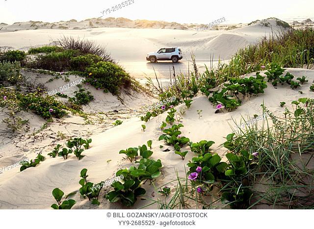 Sand Dunes on South Padre Island, Texas, USA