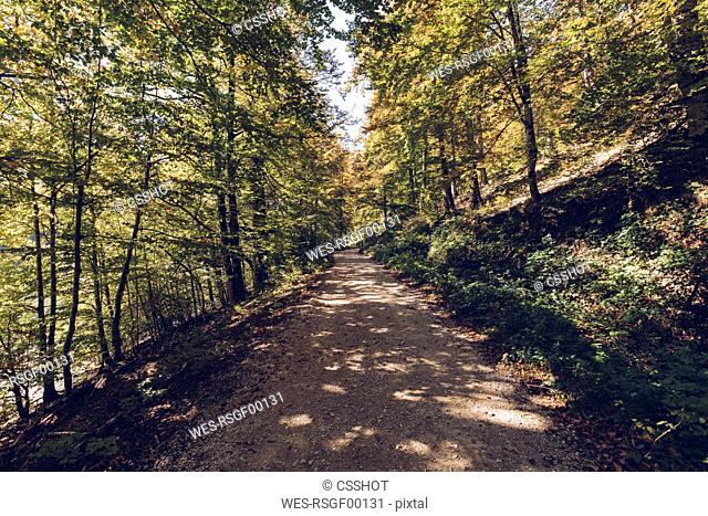 Spain, Navarra, Irati Forest, forest path