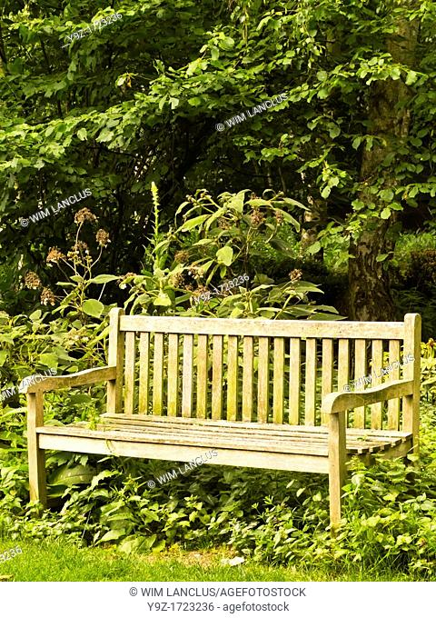 Wooden bench in park with lush foliage