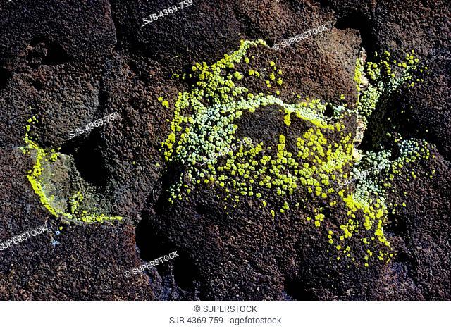 Yellow lichen on lava in California's Coso Mountains