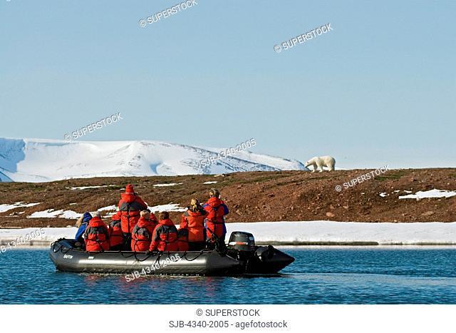 Tourists in a Zodiac boat observe a polar bear Ursus maritimus sow on Andoyane Island in Liefdefjorden, Svalbard archipelago, Norway, in summertime