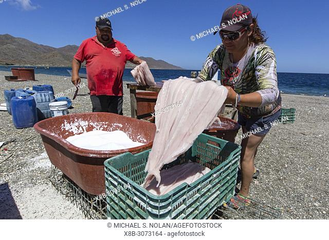 Local shark fisherman cleaning and salting their catch on Belcher Point, Magdalena Island, BCS, Mexico