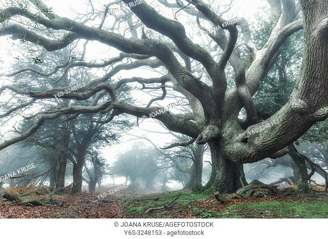 Fritham, Sloden Inclosure, New Forest, Hampshire, England, UK