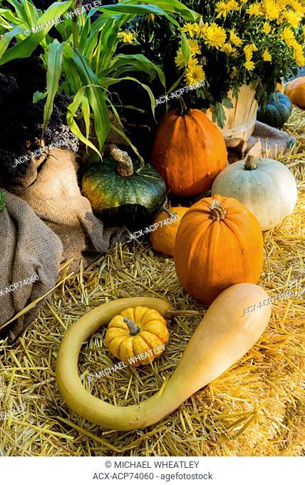 Fall harvest display, Butchart Gardens, Brentwood Bay, Vancouver Island, British Columbia, Canada