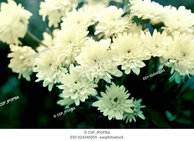 vintage color tone style of flowers, soft focus and blur concept
