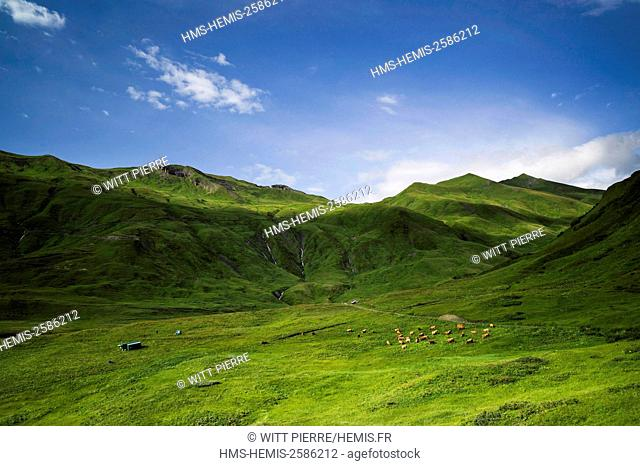 France, Savoie, Beaufortain valley, Beaufort sur Doron, mountain pastures of the Cormet de Roselend pass