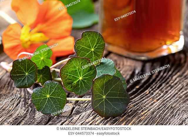 Young nasturtium leaves, with flower and a bottle of tincture in the background