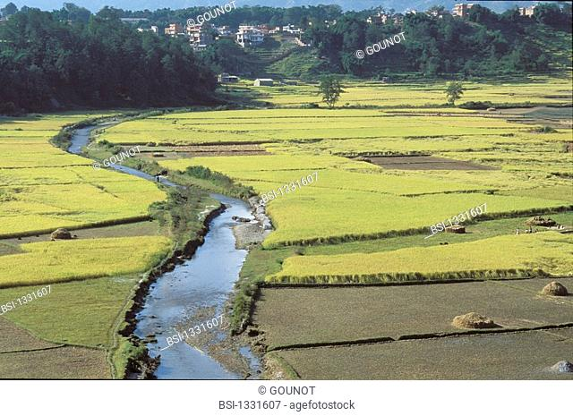 PLANTATION RICE Aerial view on rice paddies of the valley of Kathmandu in Nepal, near Bodhnath