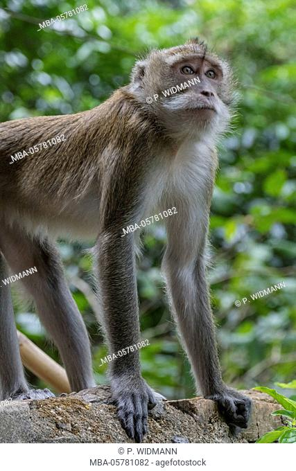 Monkey at Tiger Cave Temple