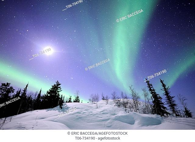 Northern lights (Aurora borealis). Northwest territories, 30 km. East of Yellowknife city, on the Great Slave Lake (temp: 42ª below zero)