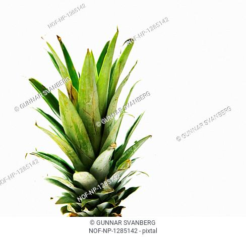 Leaves of a pineapple